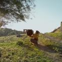 """Македонският документален филм """"Медена земя"""" получи номинации в две категории за наградата Оскар"""