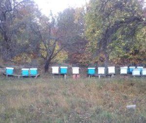 Предстои семинар за пчеларите в Босилеград
